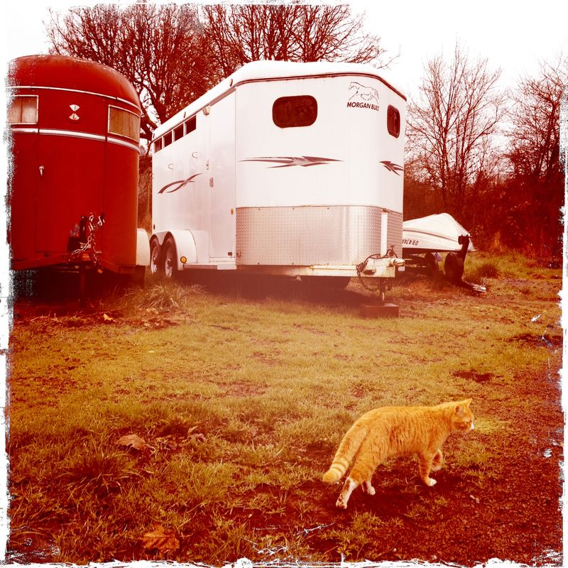 Trailer and Otis the Cat