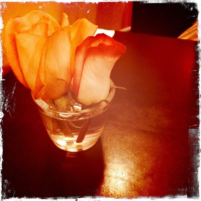 Thai Roses