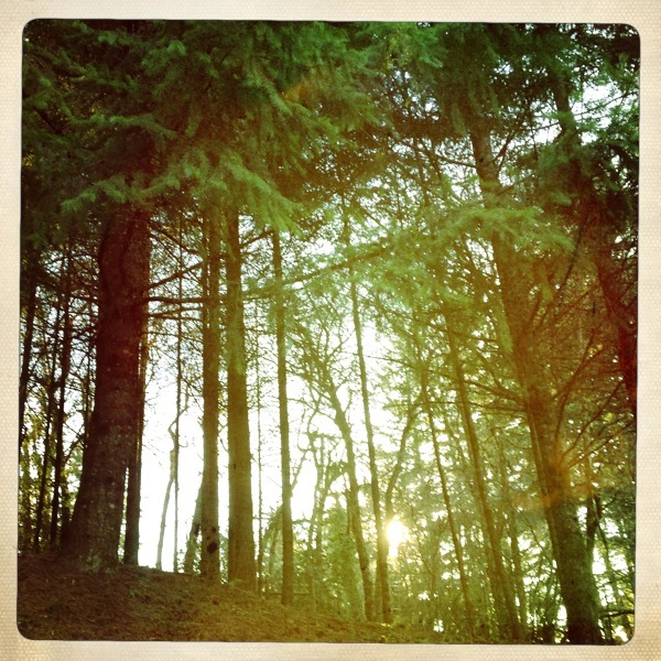 My HipstaPrint Forest 1
