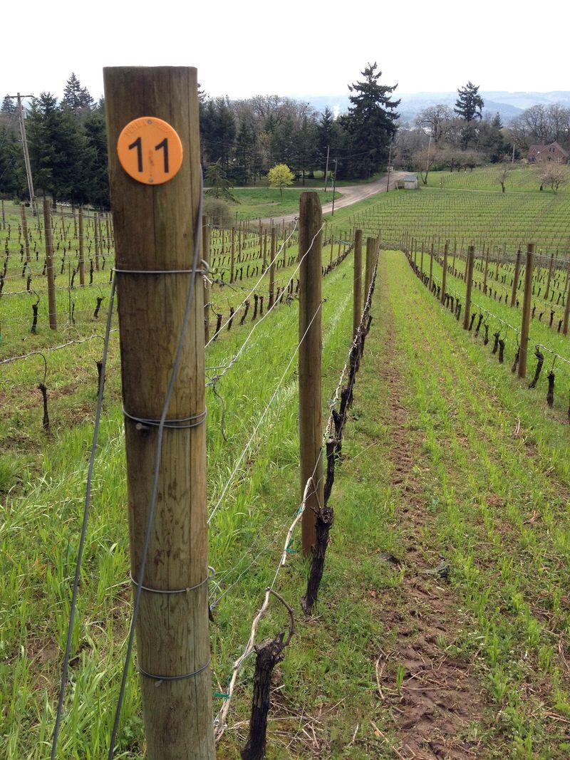 Vines Schaad Rd 1