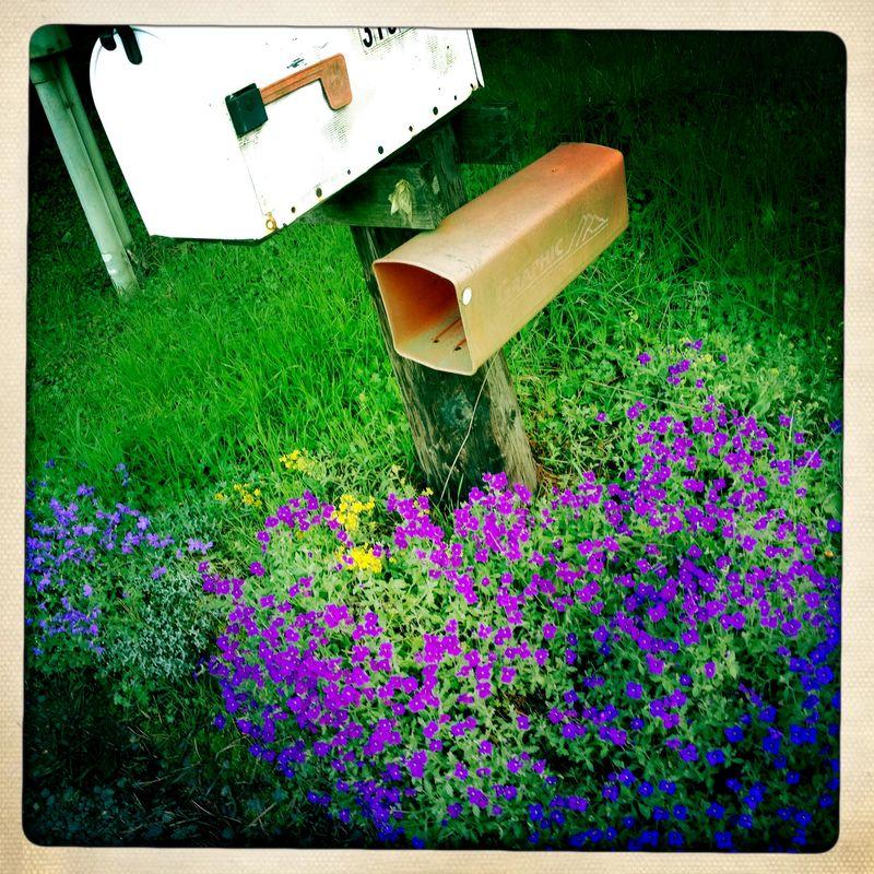 Anna's Mailbox 3