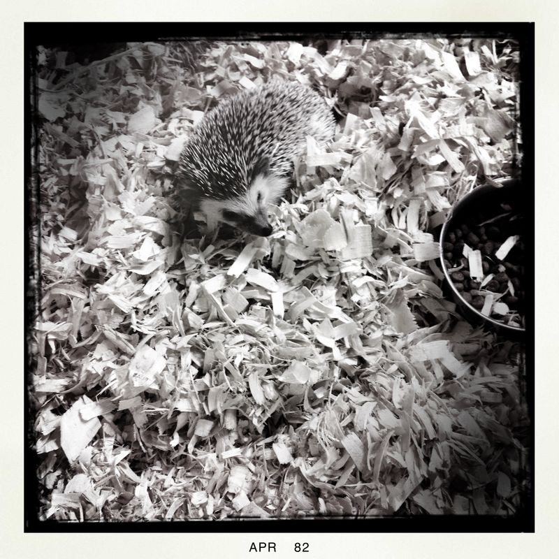2 Hedgehog