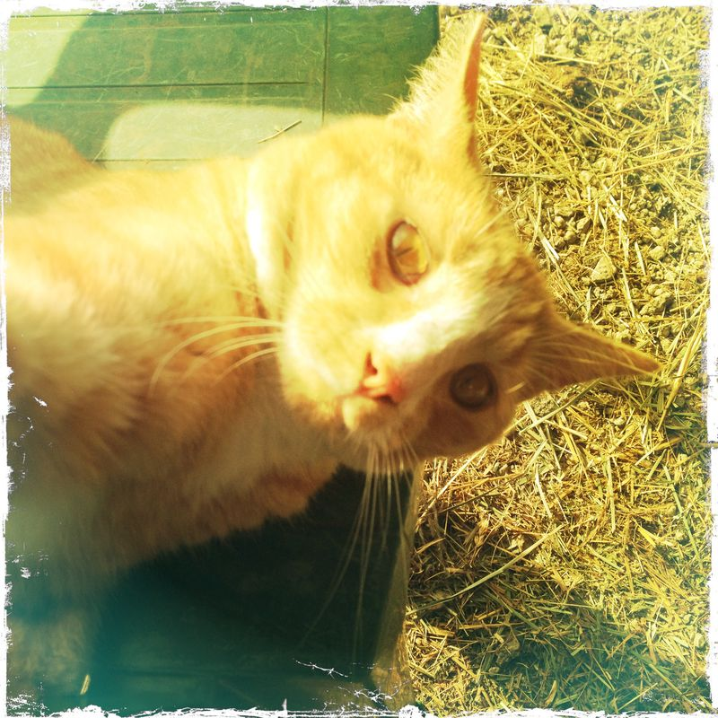 Otis Barn Cat 2