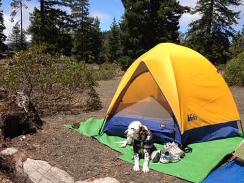 SO Dog Tent Trees