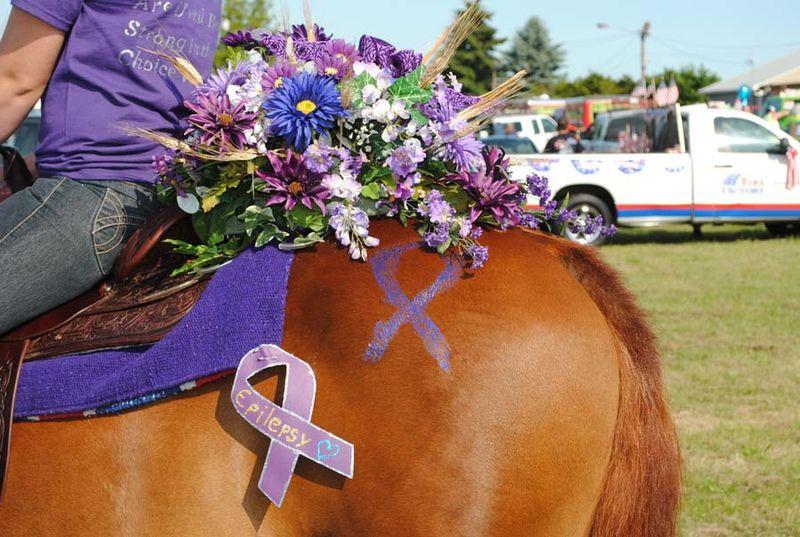 Epilepsy Horse