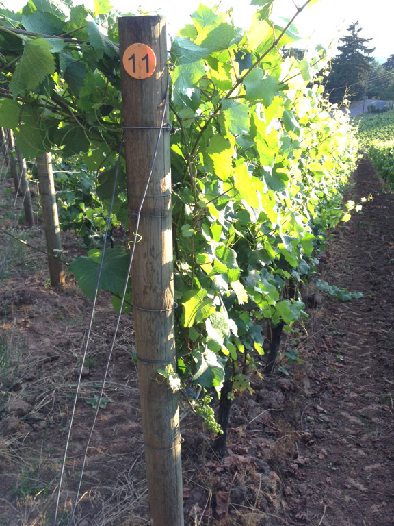 SO Vineyard 2