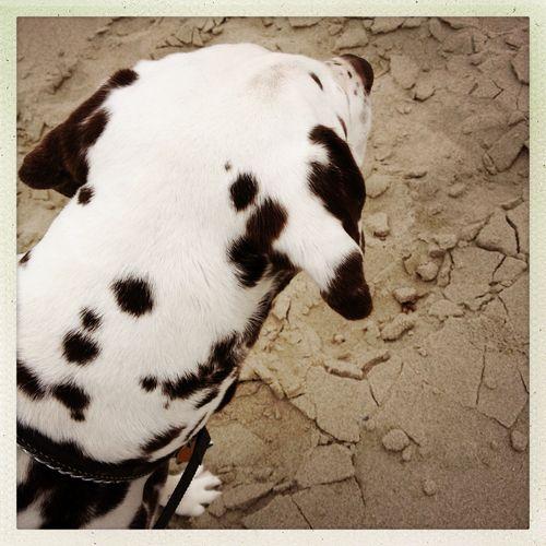 Sea Dog Spot