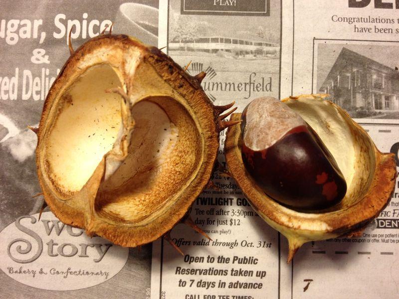 1 Buckeye Pot and Nut