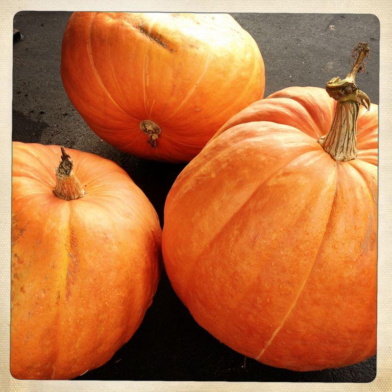 1 Pumpkins 2012