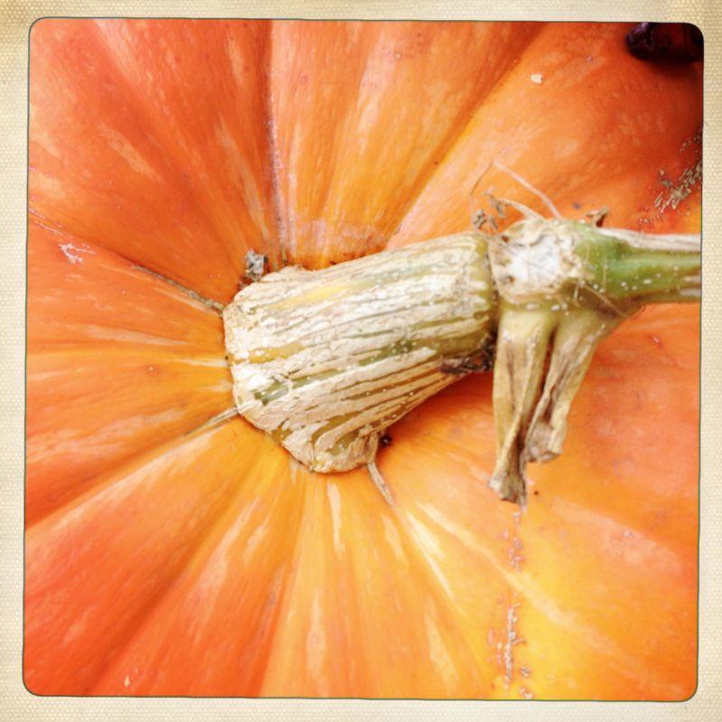 4 Pumpkins 2012