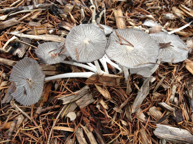 Mushrooms Low Res