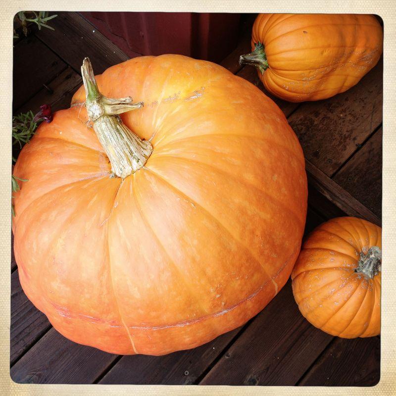 3 Pumpkins 2012