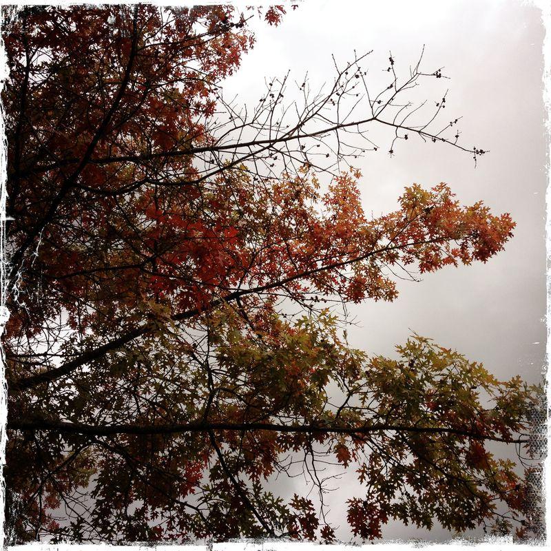 MVMS AUtumn Trees Stormy