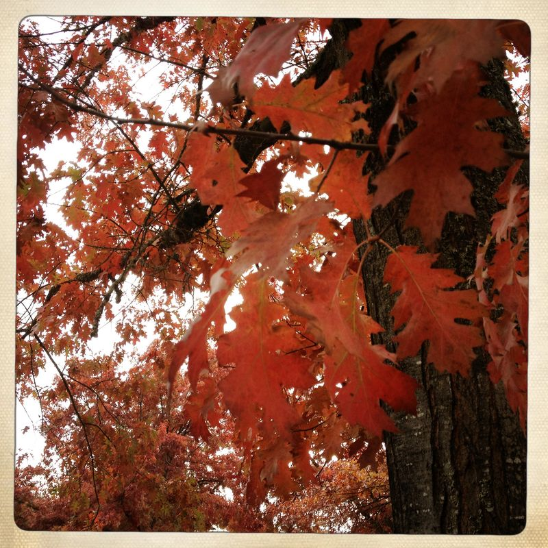 MVMS AUtumn Trees 1