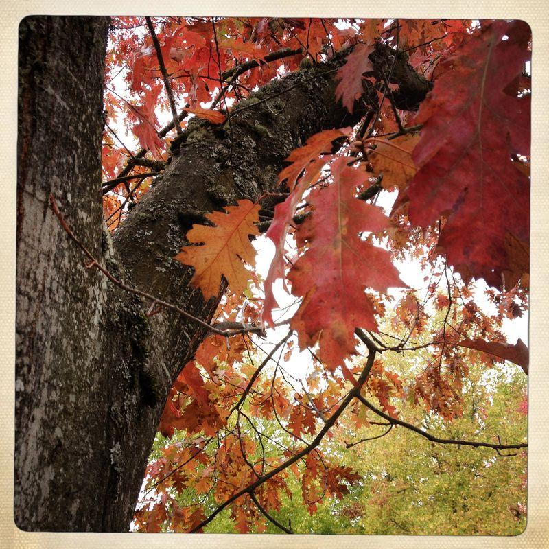 MVMS Autumn Trees 2
