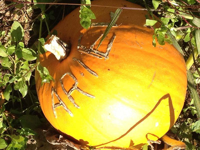 SO Pumpkin Patch 4