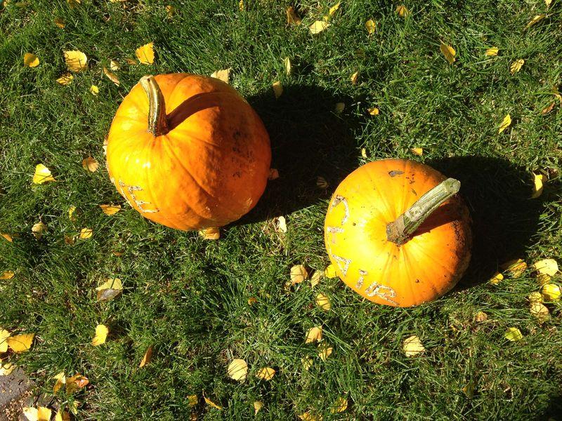 SO Pumpkins In Grass