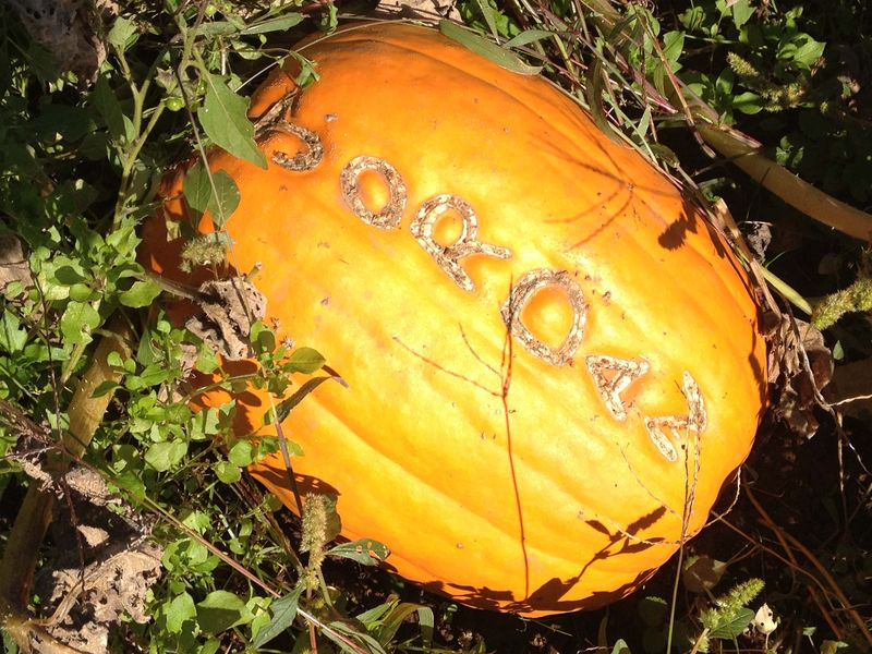SO Pumpkin Patch 3