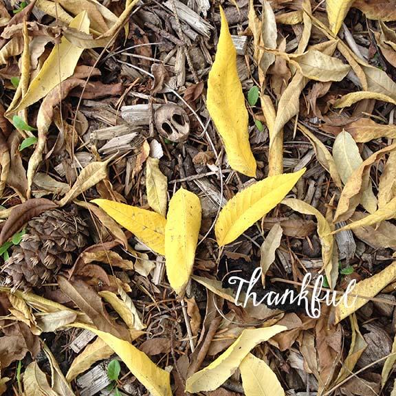 Autumn Leaves 2015 Type