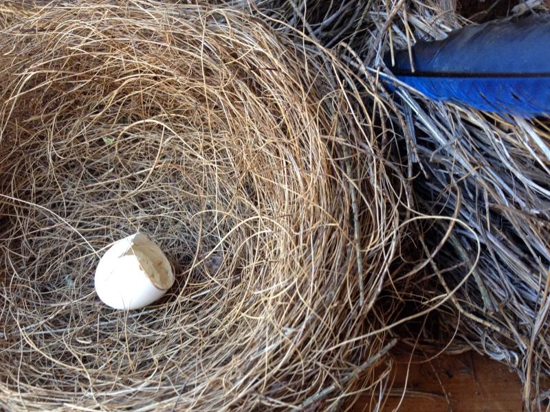SO Nest 2_4266