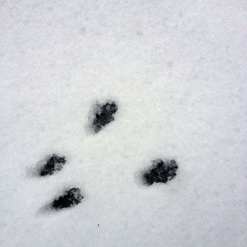 SO Squirrely Tracks