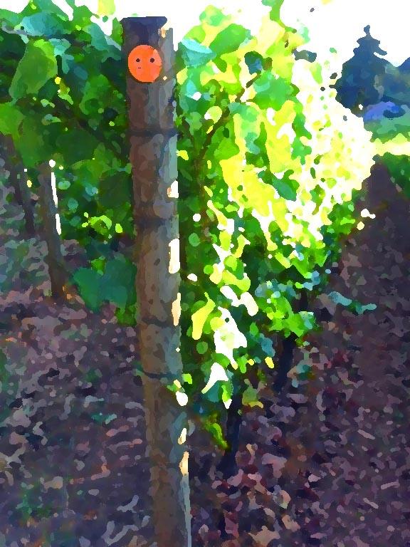 SO Post 11 Pinot