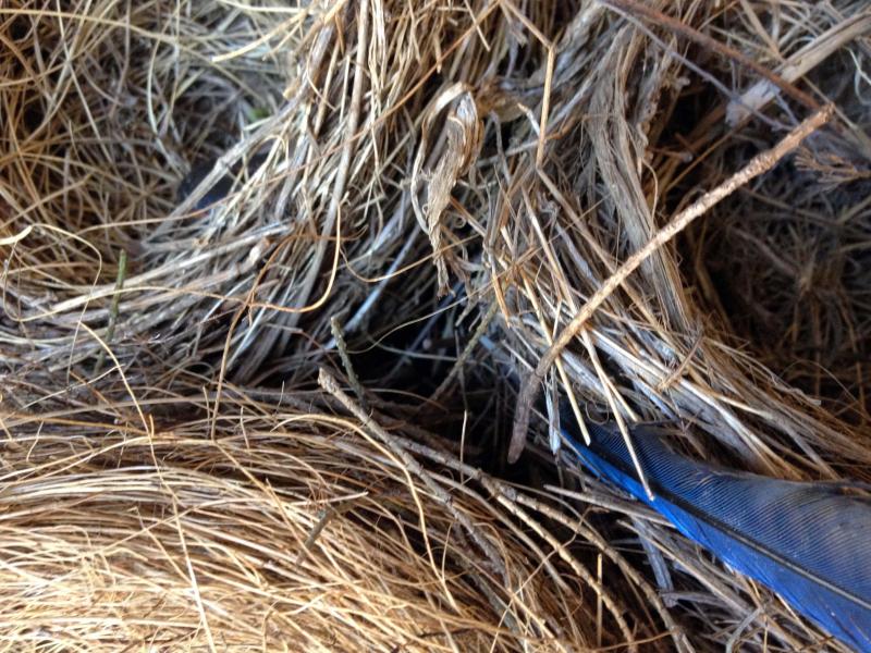 SO Nest 3_4267