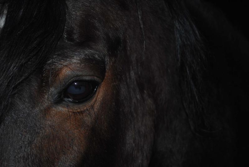 SO Pony Boy 2