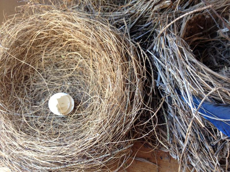 SO Nest 1_4265