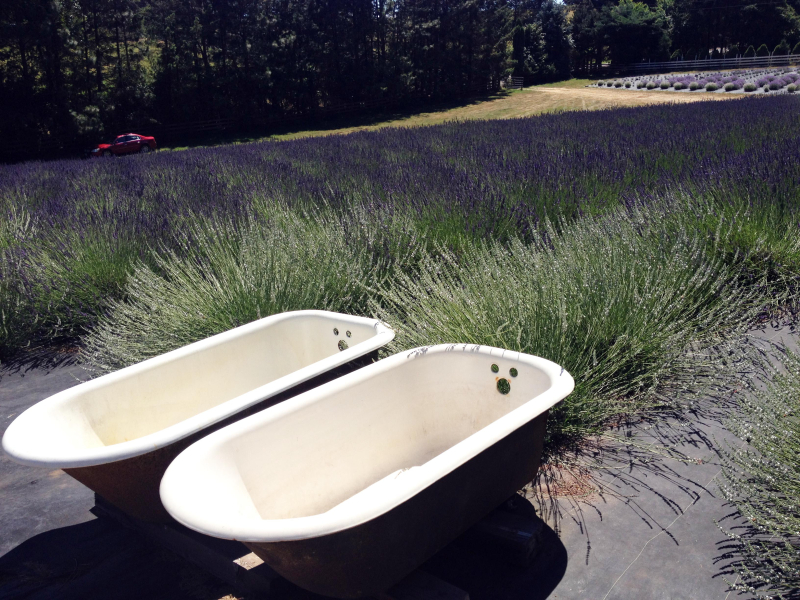 SO BathTubs Lavender 7