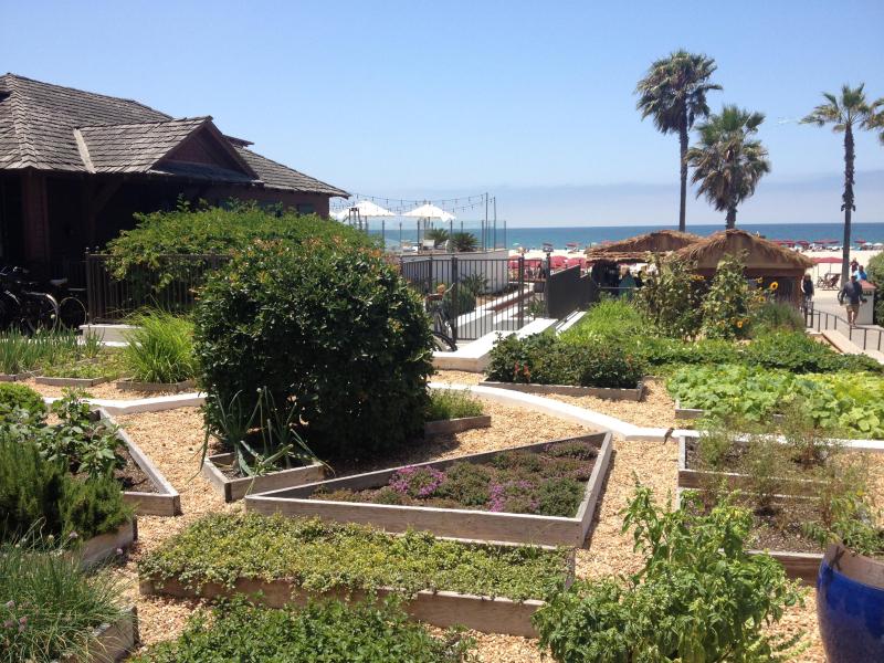18-Chef's Garden