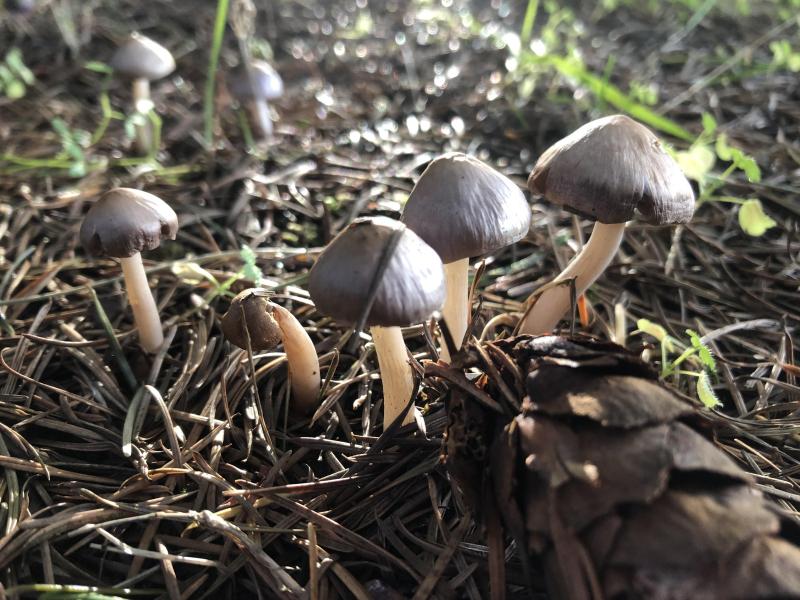 SO Mushroom 1